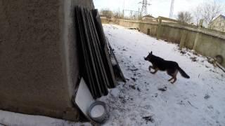 Частный дом - ремонт день #122 Как живут кошка с собакой и Шпаклёвка стяжки в малой комнате