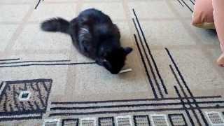 Кошка маруська решила покурить