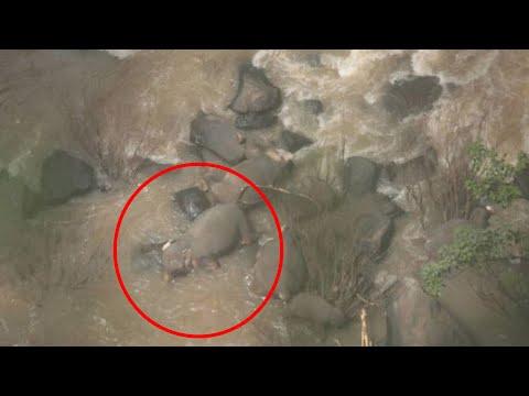 Kucing kelelahan setelah kawin dengan 5  betina; 6 gajah ditemukan tewas di air terjun  -  TomoNews