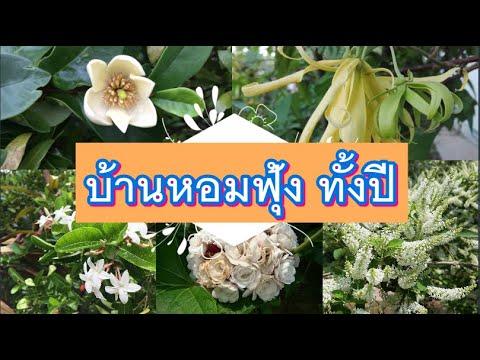 ต้นไม้ดอกหอม 5 ชนิด ดอกมีกลิ่นหอม ออกดอกตลอดปี 5 types of fragrant flowers, blooming all year round
