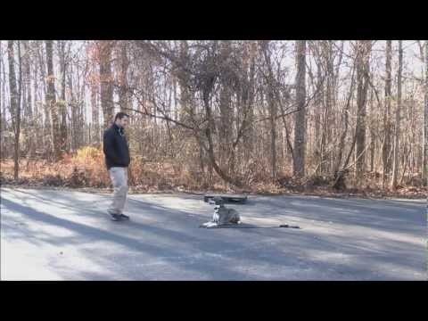 Dog Training For Pitbulls In Maryland    The Canine Training Center (The CTC)
