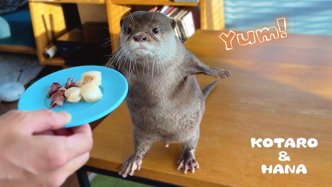 お腹すかしたカワウソが魚介をもりもり食べる時間 Otters Enjoy Seafood with Great Appetite