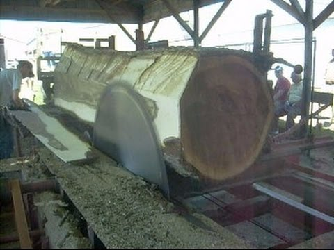 Steam Powered 1800s Circular Sawmill Sawing Huge 36