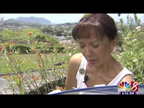 9/11/09 KHNL_Hawaii butterfly farmer