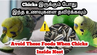 Avoid These Foods When Chicks Hatched || Harmful Foods that Will Kill Pet Bird Chicks