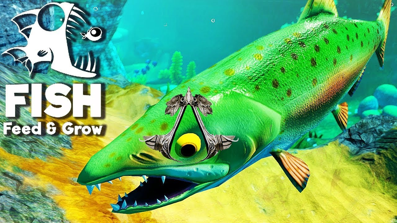 fisch feed and grow