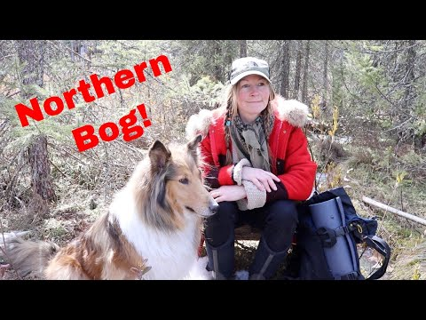 Exploring a Northern Bog & Scouting New Bushcraft Camp