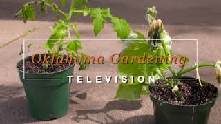 Best of Oklahoma Gardening