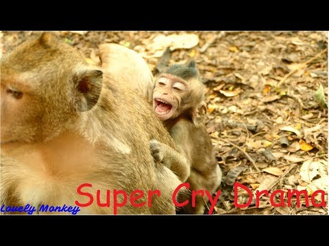 No Baby Monkey Can Drama Like Baby Cody | Baby Cody Perfect Performed Cry Drama