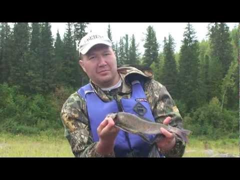 рыбалка на подкаменной тунгуске видео