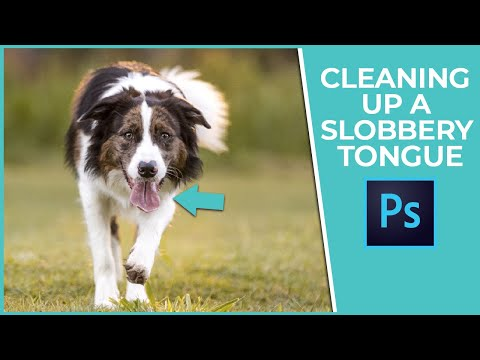 Pet Photography Editing Tutorial - Cleaning up a Slobbery Tongue
