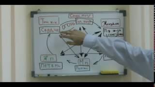 Су Джок терапия. Видеоурок 4. Силы природы 2..avi