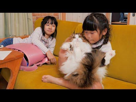 姉妹ケンカに巻き込まれ大迷惑な猫