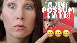 POSSUM IN MY HOUSE | WILD BABY ANIMAL // FUNNY ANIMAL VIDEO