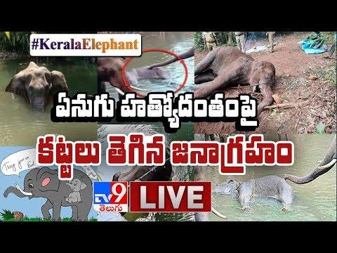 Kerala Elephant Incident || కట్టలు తెగిన జనాగ్రహం LIVE - TV9