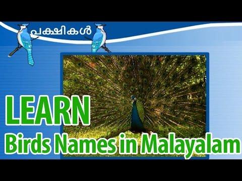 Learn Birds In Malayalam Learn About Birds Learn Birds Name In Malayalam Youtube