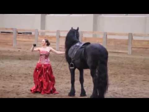 MSU Stallion Expo 2015 Melissa and Prodigy part 2