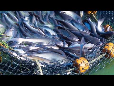 Catfish Farmer Q&A - Kenny Francis
