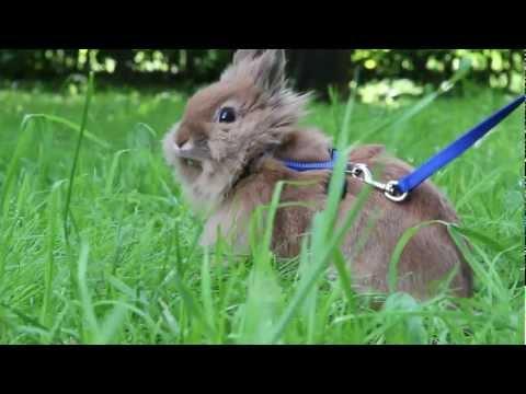 Декоративный кролик уход видео фото