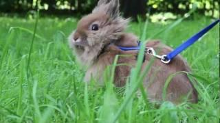 Декоративный кролик уход видео фото(, 2012-01-16T17:23:33.000Z)