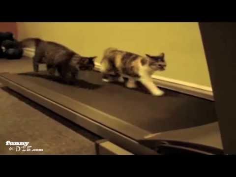 Cats on a Treadmill