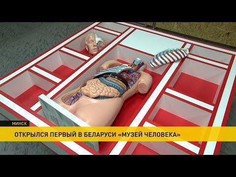 «Музей человека» впервые в Беларуси открылся в Минске: как устроен наш организм?