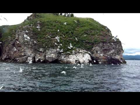 Seagulls on Baikal