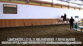 Jumping Horses For Sale-3.limoncello Ii. X Silbersee