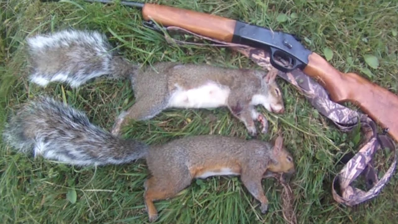 Small Game Hunting #30: 2 Gray Squirrels by  410 Shotgun