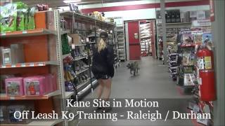 "1.5yo Shar Pei Mix ""kane"" Before And After Video - Raleigh Durham Dog Training"
