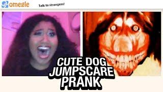 Cute Dog JUMPSCARE PRANK on Omegle #7!