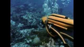 El Mundo Submarino De Jacques Cousteau - El Mundo Salvaje De La Jungla De Coral