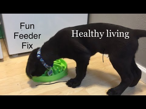 Dog Throwing Up After Eating/drinking? Try These Fun Feeder Dishes