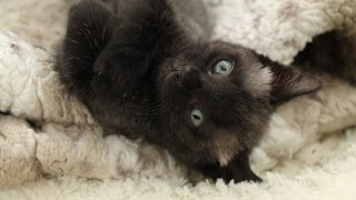The amazing colour changing kitten