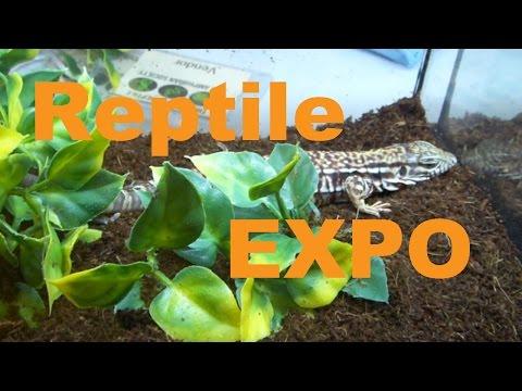 REPTILE EXPO!! calgary reptile expo