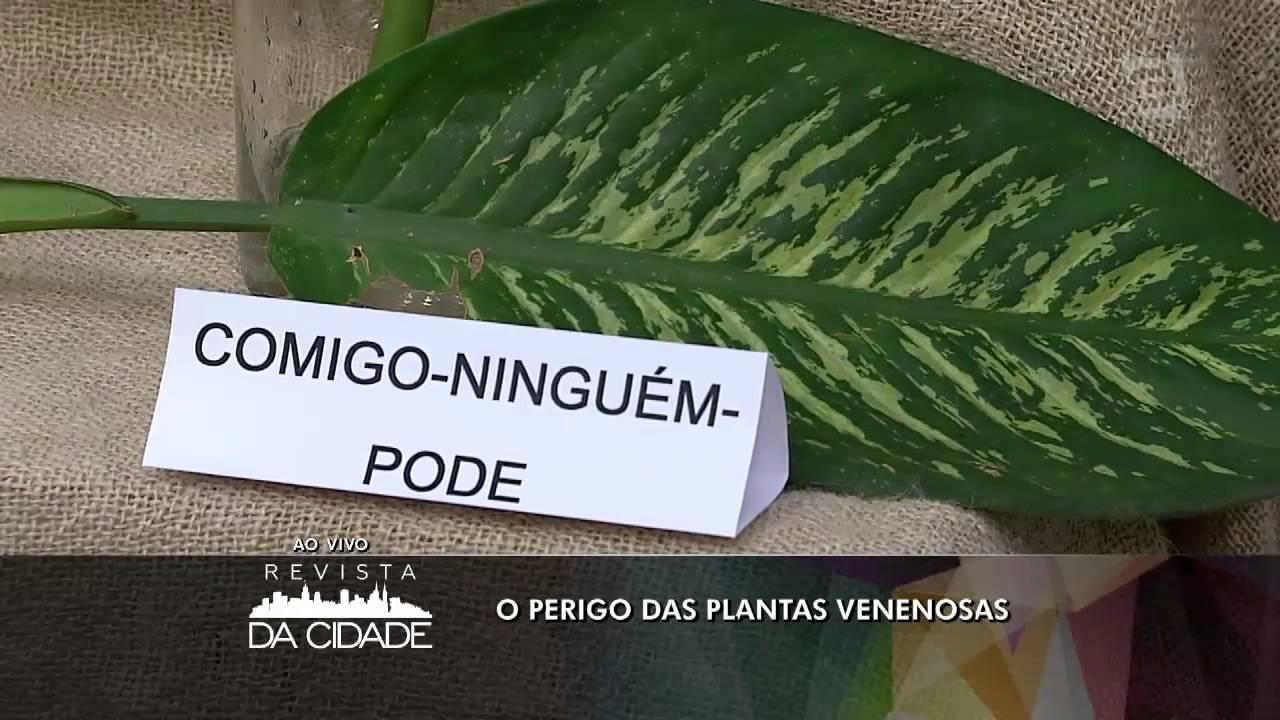 Revista da cidade plantas venenosas 30 09 2015 youtube - Plantas ornamentales venenosas ...