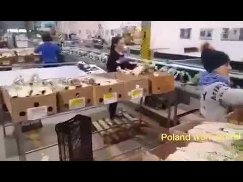 Работа в Польше - упаковка цветов