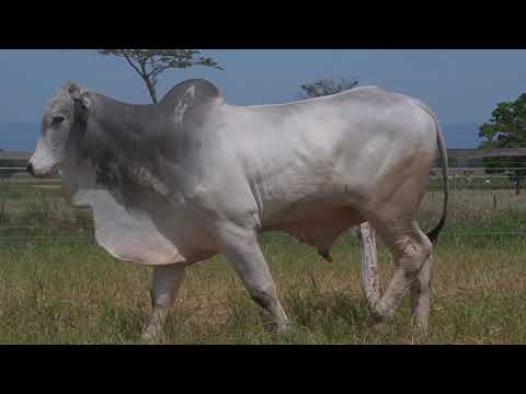 LOTE 195   GPO A 3620