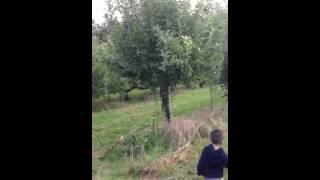 Anthony apple picking