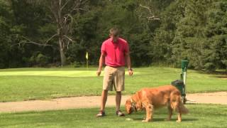 Super Dogs: Molly From The Oaks Golf Course In Springfield, Il