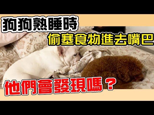一豬小公主|狗狗熟睡時 偷塞食物進去嘴巴 他們會發現嗎?