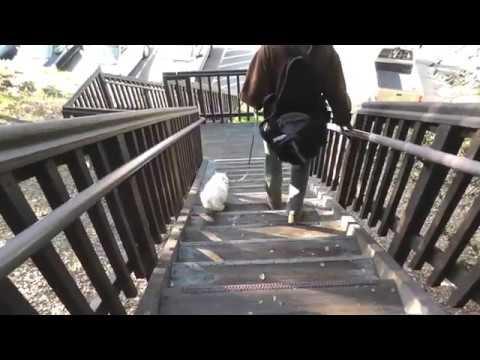 Eduardo (the Leash-Walking Cat) Goes Down Stairs at U.C. Berkeley
