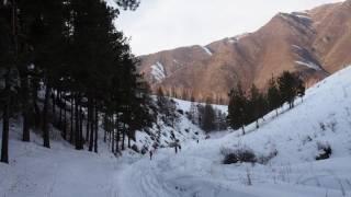 ЭКОСТАН. Вырубка лесов Ак-Тюза .Часть 2