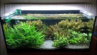 Восходы и закаты в растительном аквариуме