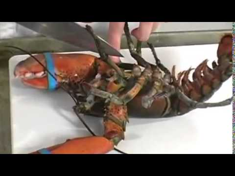 How to Kill (and Cook) a Lobster