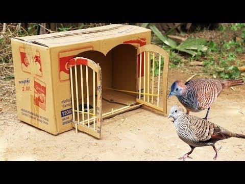 Creative Best Bird Trap Technology - Build Quick Bird Trap Make from Cardboard That Work 100%