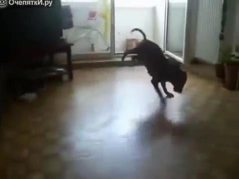 питбуль собаки приколы смешной одежде