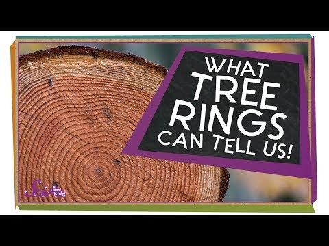 Life As A Tree!