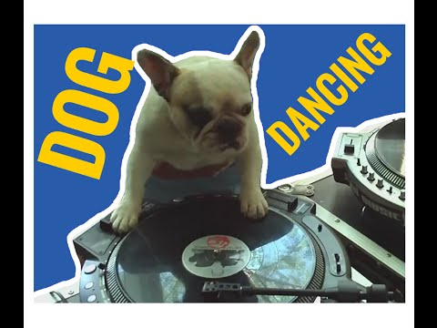 DOG dancing –  coub video compilation