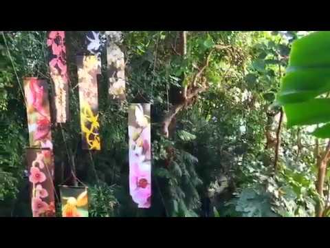 exposition mille une orchid es au jardin des plantes youtube. Black Bedroom Furniture Sets. Home Design Ideas